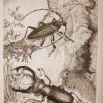усач и жук олень. Сепия 150x150 - Компьютерные рисунки