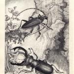 №0009. Жук олень и жук усач 150x150 - Альбом №3