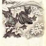 .056. Летучая лягушка 150x150 - Альбом №2