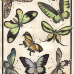 .101. Бабочки 150x150 - Альбом №2