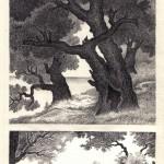 .165. Дубы 150x150 - Альбом №2