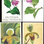 на открытках 0004 150x150 - Орхидеи на открытках
