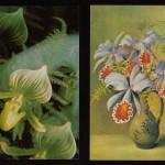 на открытках 0008 150x150 - Орхидеи на открытках