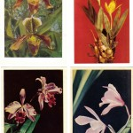 на открытках 0012 150x150 - Орхидеи на открытках