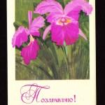 на открытках 0017 150x150 - Орхидеи на открытках