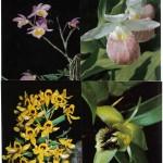 на открытках 0019 150x150 - Орхидеи на открытках