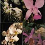 на открытках 0020 150x150 - Орхидеи на открытках