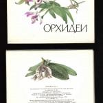 на открытках 0023 150x150 - Орхидеи на открытках