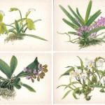 на открытках 0025 150x150 - Орхидеи на открытках