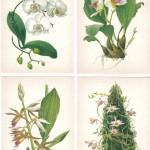 на открытках 0026 150x150 - Орхидеи на открытках