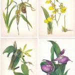 на открытках 0027 150x150 - Орхидеи на открытках