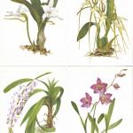 на открытках 0029 150x150 - Орхидеи на открытках
