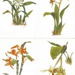 на открытках 0032 150x150 - Орхидеи на открытках