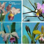 на открытках 0034 150x150 - Орхидеи на открытках