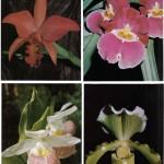 на открытках 0035 150x150 - Орхидеи на открытках