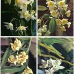 на открытках 0038 150x150 - Орхидеи на открытках