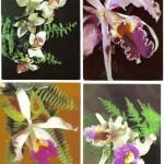 на открытках 0042 150x150 - Орхидеи на открытках