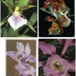 на открытках 0047 150x150 - Орхидеи на открытках