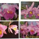 на открытках 0048 150x150 - Орхидеи на открытках