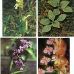 на открытках 0050 150x150 - Орхидеи на открытках