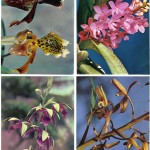 на открытках 0051 150x150 - Орхидеи на открытках