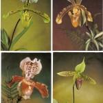 на открытках 0053 150x150 - Орхидеи на открытках