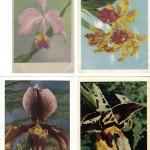 на открытках 0056 150x150 - Орхидеи на открытках