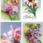 на открытках 0062 150x150 - Орхидеи на открытках