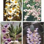 на открытках 0066 150x150 - Орхидеи на открытках