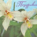 на открытках 0069 150x150 - Орхидеи на открытках