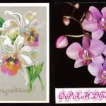 на открытках 0072 150x150 - Орхидеи на открытках