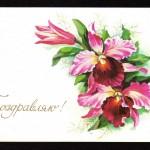 на открытках 0074 150x150 - Орхидеи на открытках