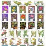 0025 306 150x150 - Флора отечественная