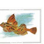 Агономал хоботный  150x150 - Другие животные