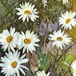 Алифанова М. Ромашки 150x150 - Цветы