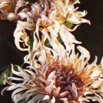 Ами Раймонд 150x150 - Цветы
