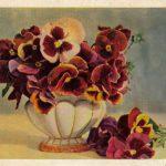 Анютины глазки в вазочке 150x150 - Цветы