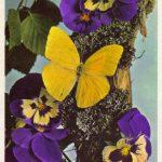 Анютины глазки и бабочка 150x150 - Цветы