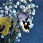 Анютины глазки и ландыши 150x150 - Цветы
