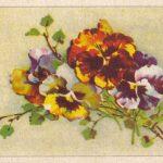 Анютины глазки рисунок 1 150x150 - Цветы