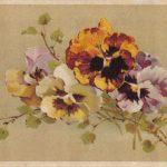 Анютины глазки рисунок 2 150x150 - Цветы