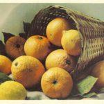 Апельсины и лимоны 150x150 - Различные растения