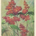 Астильбе 150x150 - Цветы