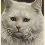 Белая кошка  150x150 - Другие животные