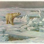 Белый медведь среди льдов  150x150 - Другие животные