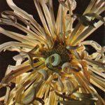 Белый паук 150x150 - Цветы
