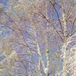 Берёзы зимой 150x150 - Пейзажи