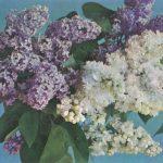 Букет 150x150 - Цветы