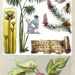 Бумажные растения 150x150 - Удивительные растения