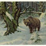 Бурый мдведь в тайге  150x150 - Другие животные